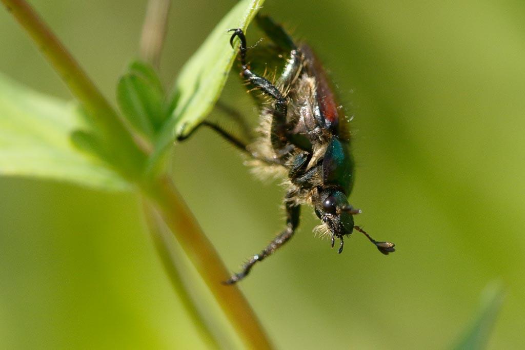 IMAGE: http://www.zen20934.zen.co.uk/GalleryPics/Photos/Arthropods/Beetles/insects%20beetle%20A01_001_01-06-19.jpg